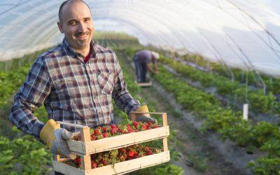 Retos y ventajas que plantea el trabajo temporal en el sector agrario